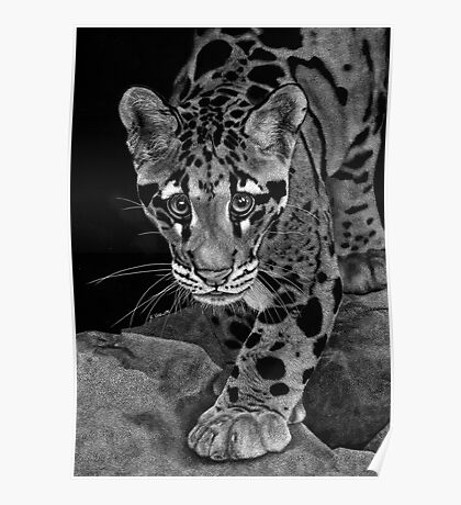 Yim -  The Clouded Leopard Poster
