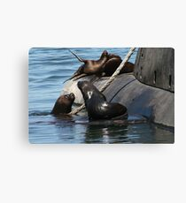 Sea Lions fun by the old submarine!!! Canvas Print