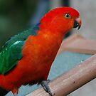 Wild Parrot Visit by byronbackyard