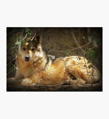 """""""Lobo"""" Photographic Print"""