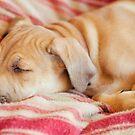 Let sleeping dogs lie.... by Jenny Dean