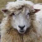 No!! What Hay?? by Stephen J  Dowdell
