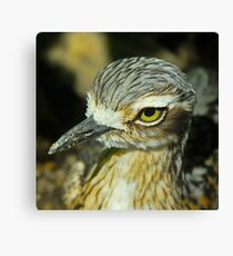 Bush Thick Knee Profile Canvas Print