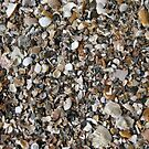 Shells Wallpaper by Cole Stockman