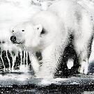Polar pleasures by Alan Mattison