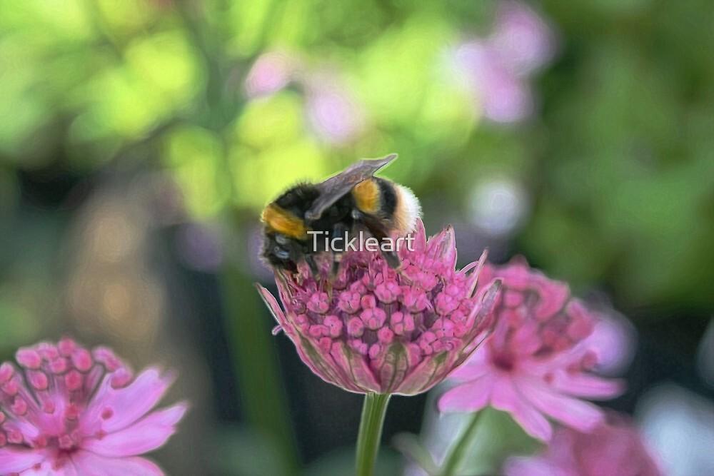 Bee - Little worker by Tickleart
