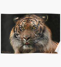 To kiss a Tiger :-) Poster