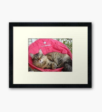 PEARL - MY LUCKY BUM Framed Print