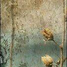 rose of sharon ... from last year ... ha ha by dabadac