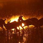 A Delta Sunrise Silhouette ! by jozi1