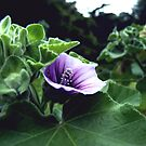 Purple Under by BlackHatRat