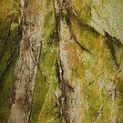 Tree Reflections by Deborah  Benoit
