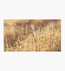 dancing in grass skirts Photographic Print