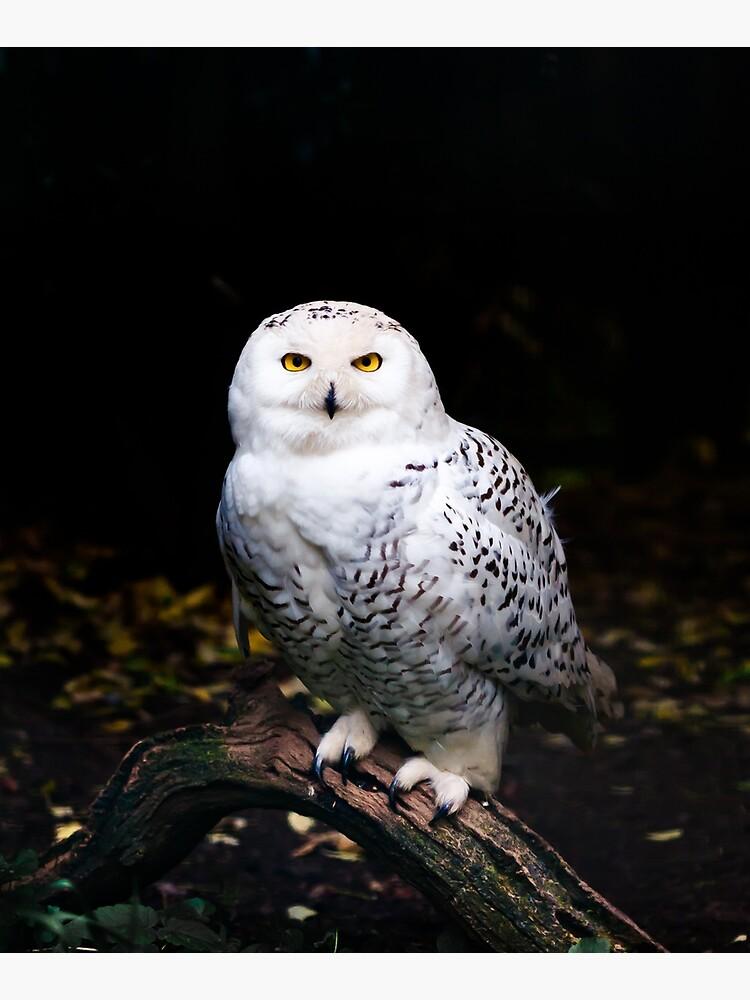 Majestic winter snowy owl by patriklovrin