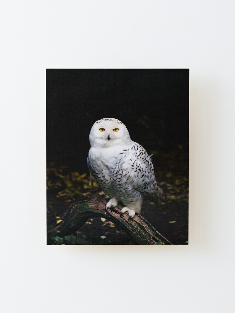 Alternate view of Majestic winter snowy owl Mounted Print
