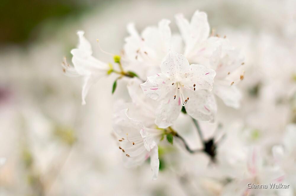 Whisper of White - Dallas Blooms by Glenna Walker