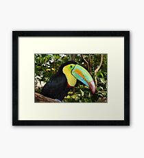 Rainbow Toucan Framed Print