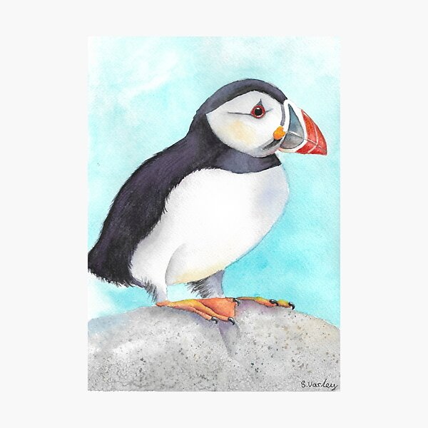 Puffin watercolour bird painting Photographic Print