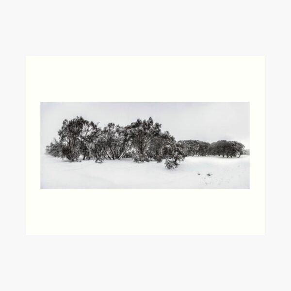 Snow gums of Mt Hotham Art Print