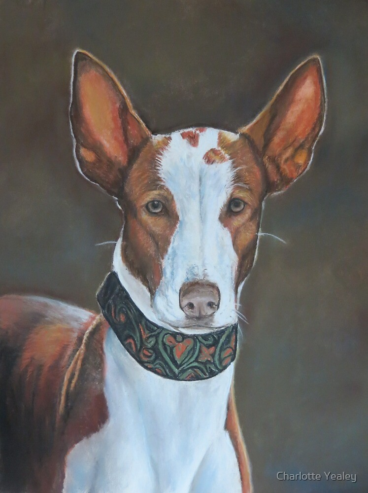 Kenzie the Ibizan Hound by Charlotte Yealey