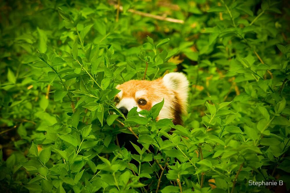 Peeking Panda by Stephanie B