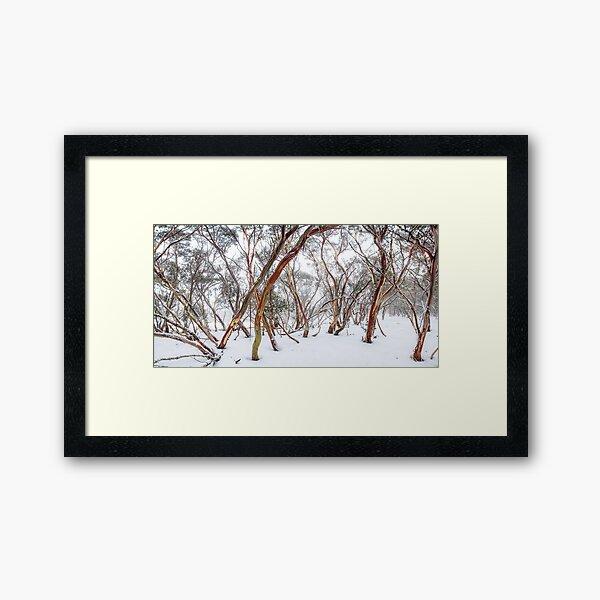 Snow Gum Framed Art Print