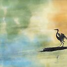 Great Blue Heron by xplor-r