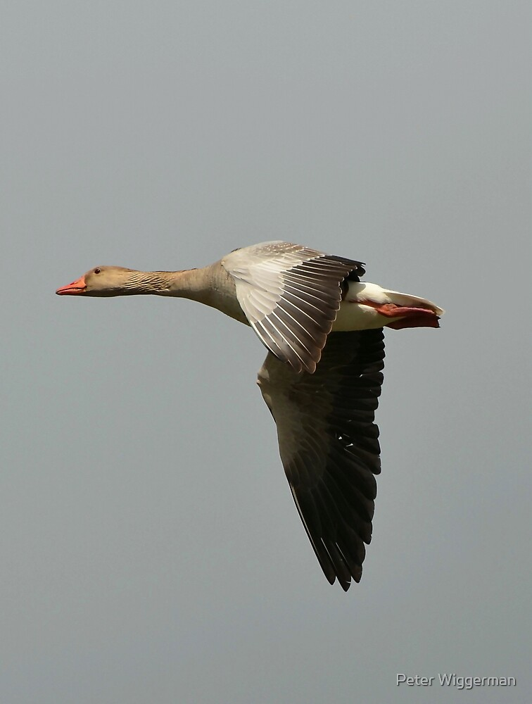 Goose by Peter Wiggerman