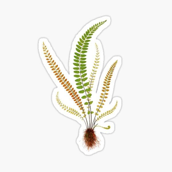 Just Grama- Plant Inspired- Maidenhair Spleenwort Sticker