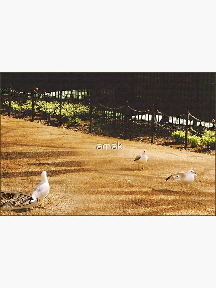 A Flock of Seagulls  by amak