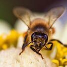 Honey Bee 2 by Jazzyjane