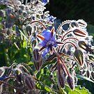 fleurs  by juha