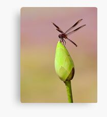 Dragonfly on Lotus Bud 2 Canvas Print