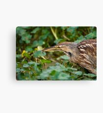 American Bitter and Tiny Fish Canvas Print