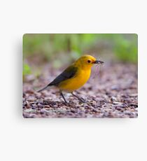 Female Prothonotary Warbler - Digital Oil Canvas Print