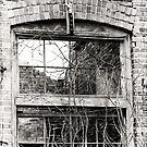 window with no view by vigor