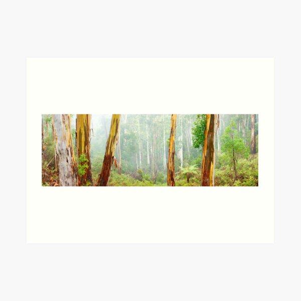 Foggy Forest, Otways National Park, Victoria, Australia Art Print