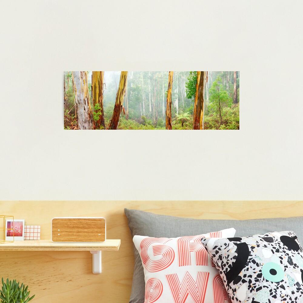 Foggy Forest, Otways National Park, Victoria, Australia Photographic Print