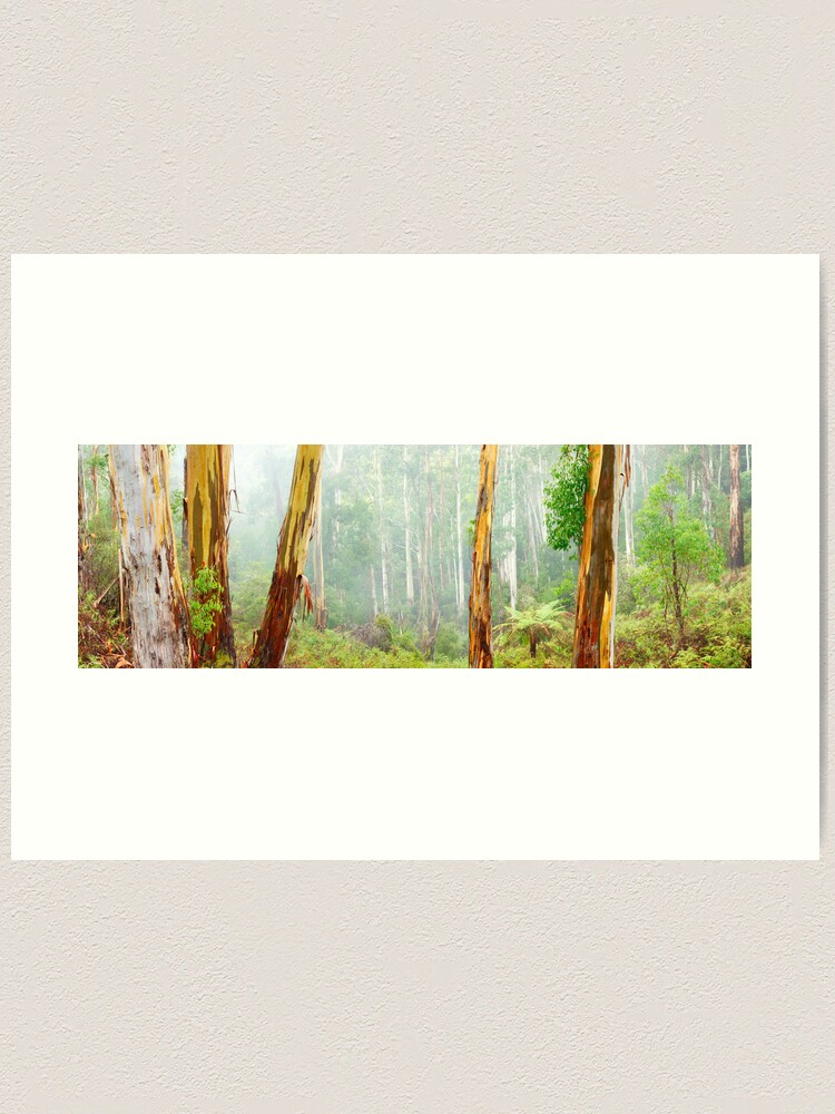 Alternate view of Foggy Forest, Otways National Park, Victoria, Australia Art Print
