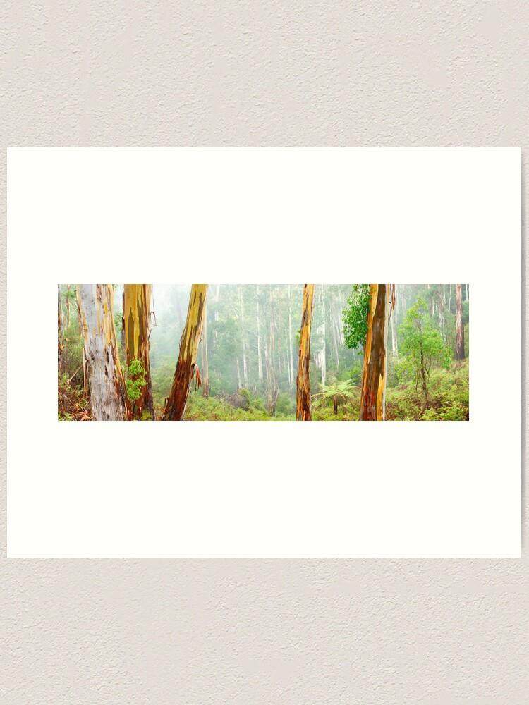 Alternate view of Foggy Forest, Otways National Park, Victoria, Australia Art Print