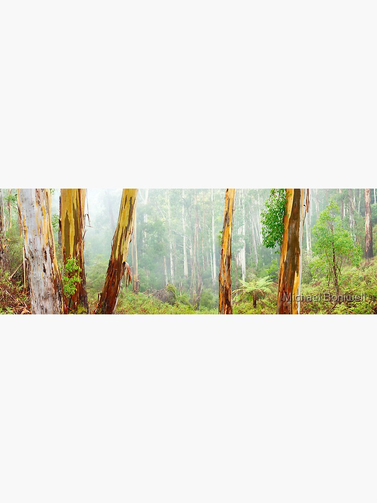 Foggy Forest, Otways National Park, Victoria, Australia by Chockstone