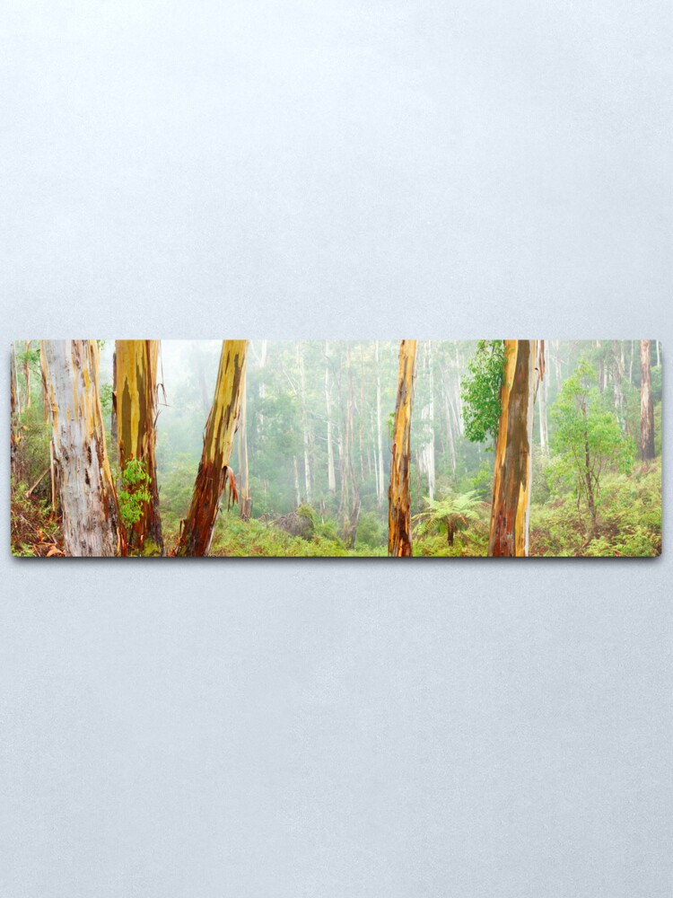 Alternate view of Foggy Forest, Otways National Park, Victoria, Australia Metal Print