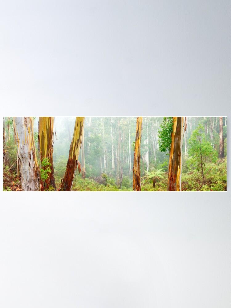 Alternate view of Foggy Forest, Otways National Park, Victoria, Australia Poster