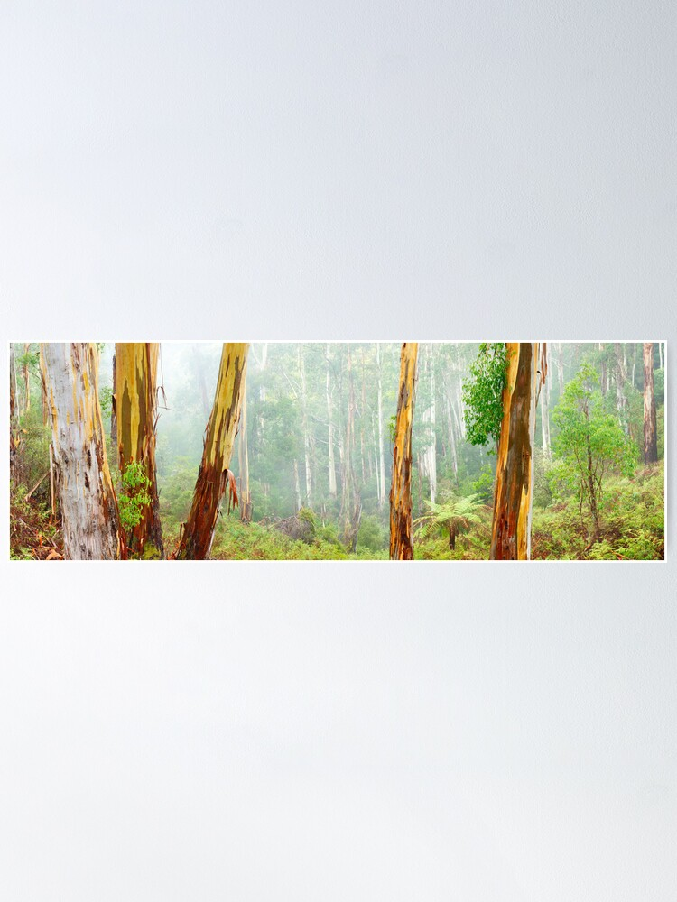 Alternate view of Foggy Forest, Otways National Park, Victoria, Australia Poster