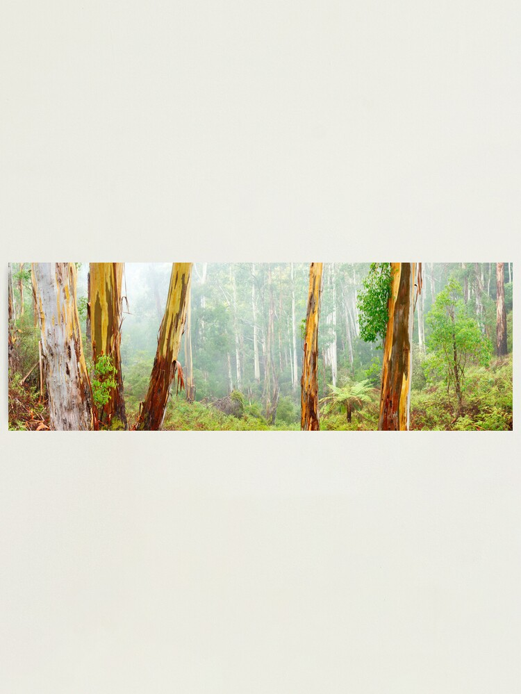 Alternate view of Foggy Forest, Otways National Park, Victoria, Australia Photographic Print