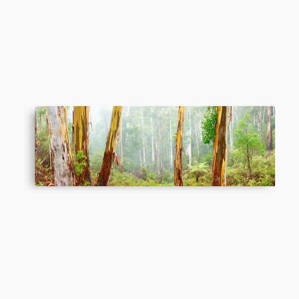 Foggy Forest, Otways National Park, Victoria, Australia Canvas Print