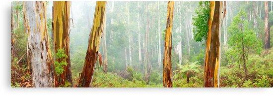 Foggy Forest, Otways National Park, Victoria, Australia by Michael Boniwell