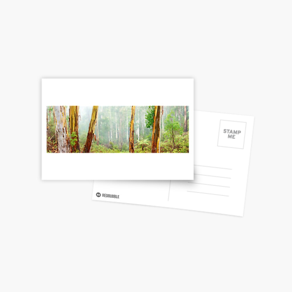 Foggy Forest, Otways National Park, Victoria, Australia Postcard