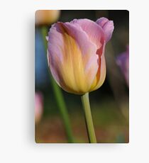 Tulip at Cape Fear Canvas Print
