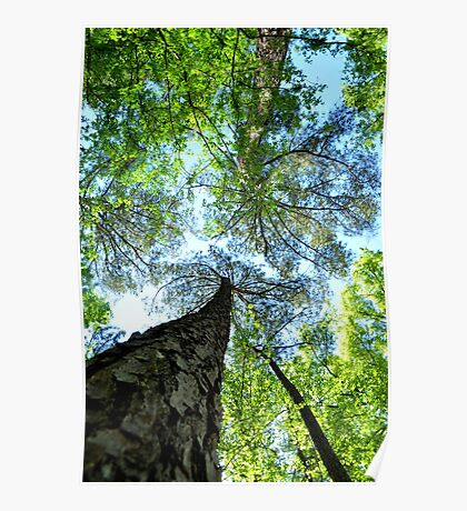Trees at Cape Fear Poster